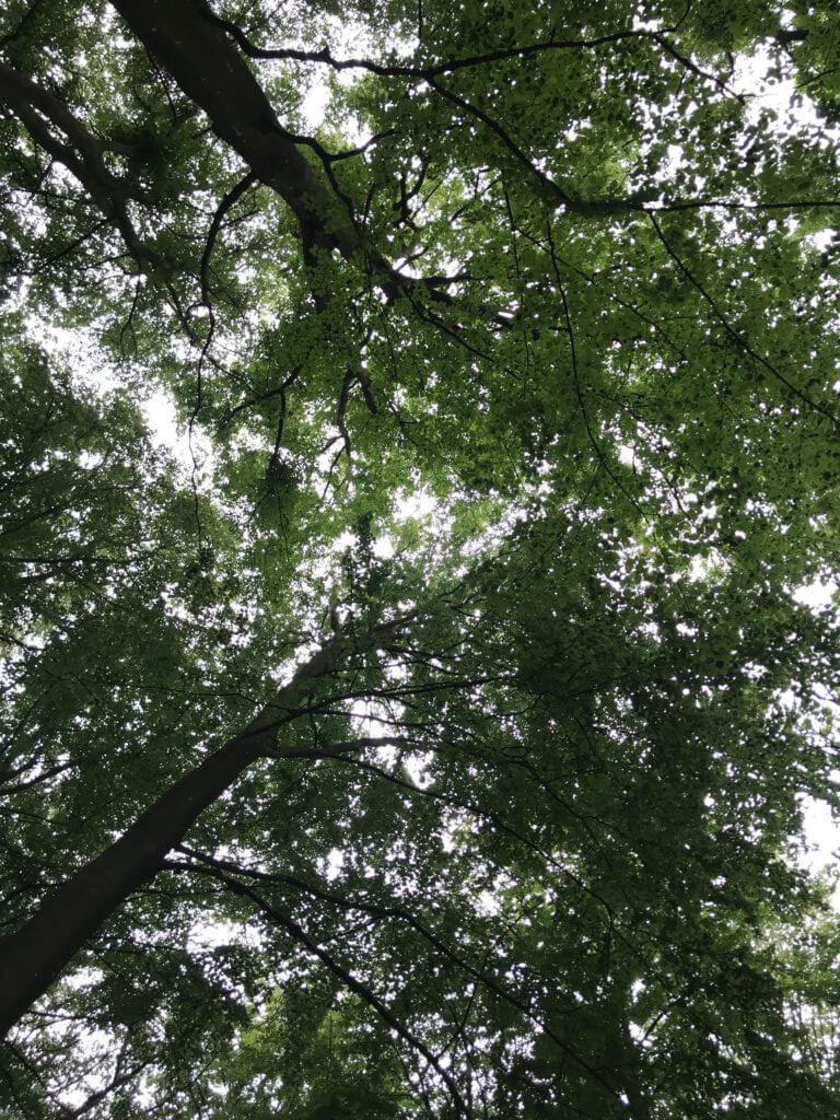 Mindful walking og yoga I naturen er træningsterapi til stress